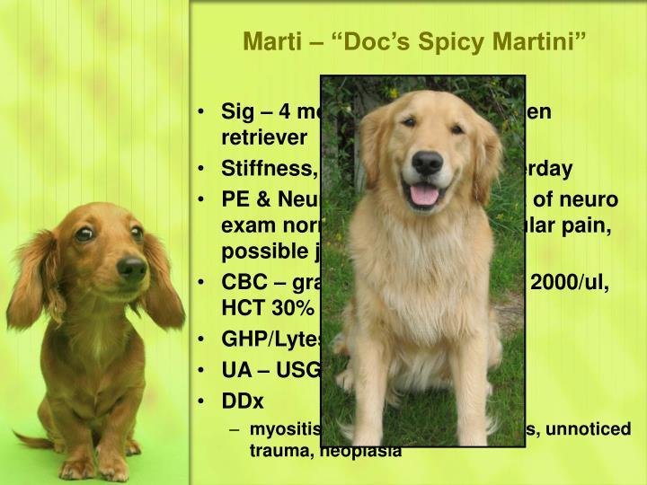 """Marti – """"Doc's Spicy Martini"""""""