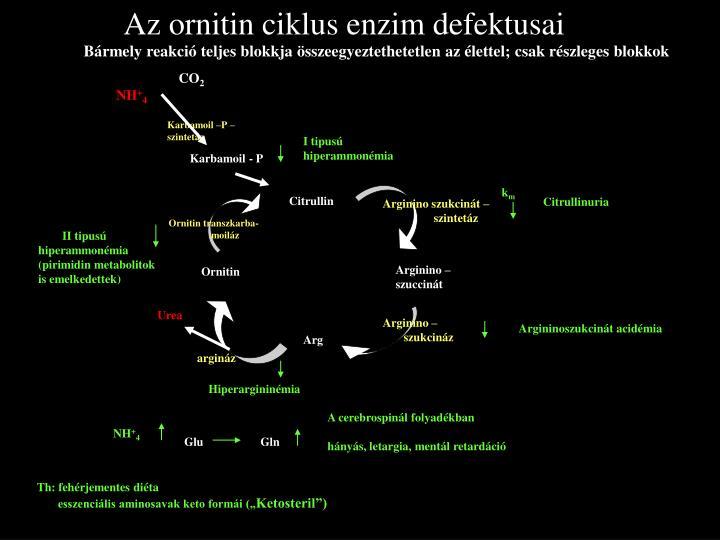 Az ornitin ciklus enzim defektusai