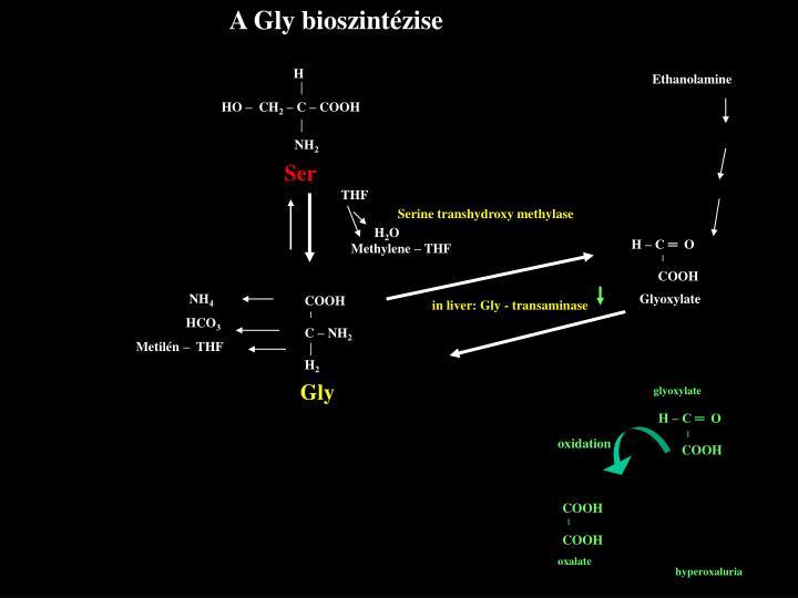 A Gly bioszintézise