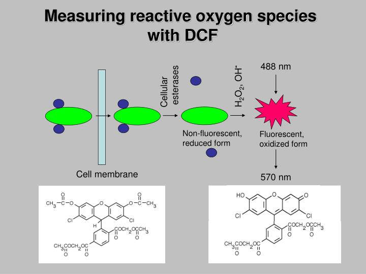 Measuring reactive oxygen species