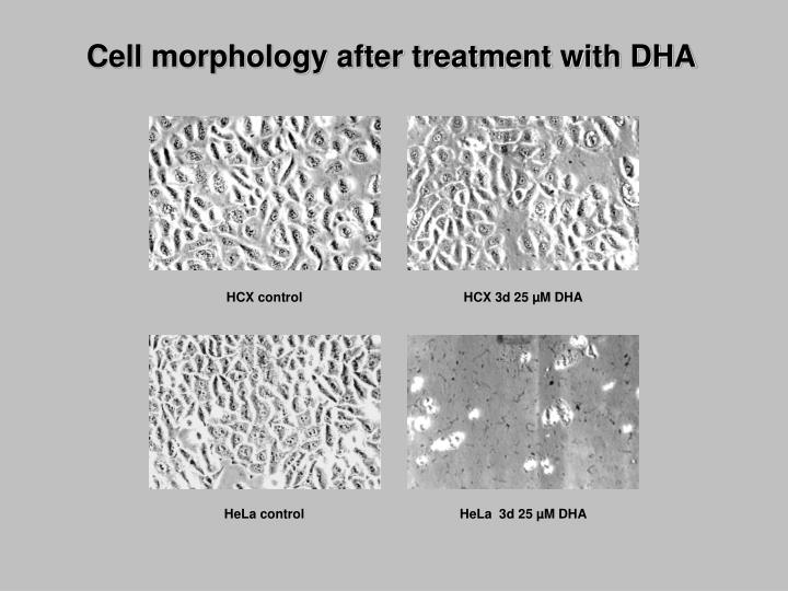 Cell morphology after treatment with DHA
