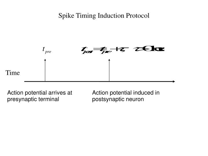 Spike Timing Induction Protocol