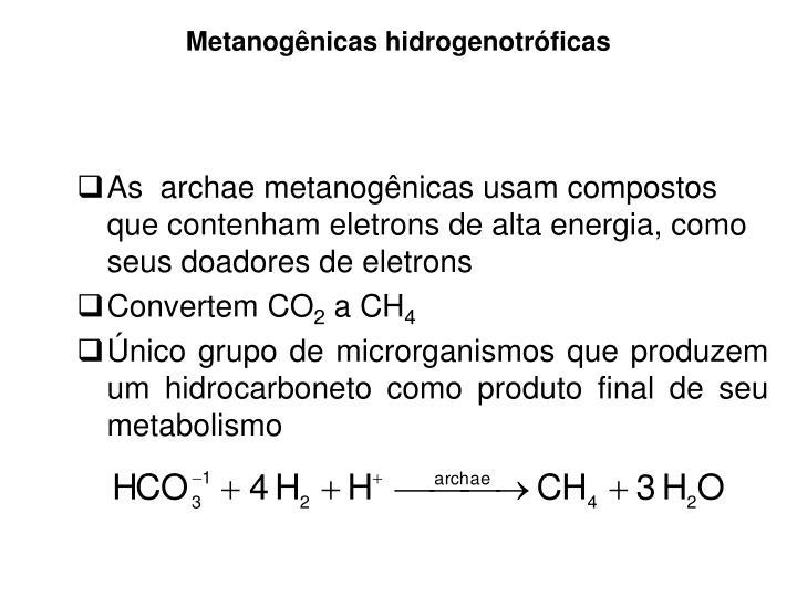 Metanogênicas hidrogenotróficas