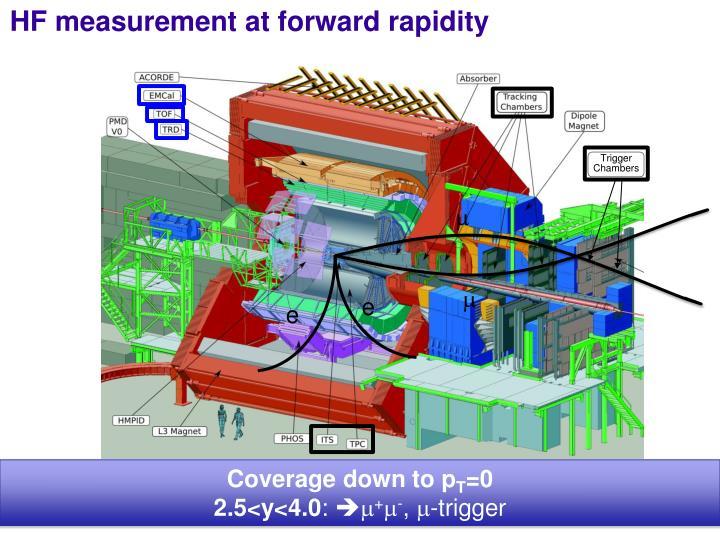 HF measurement at forward rapidity
