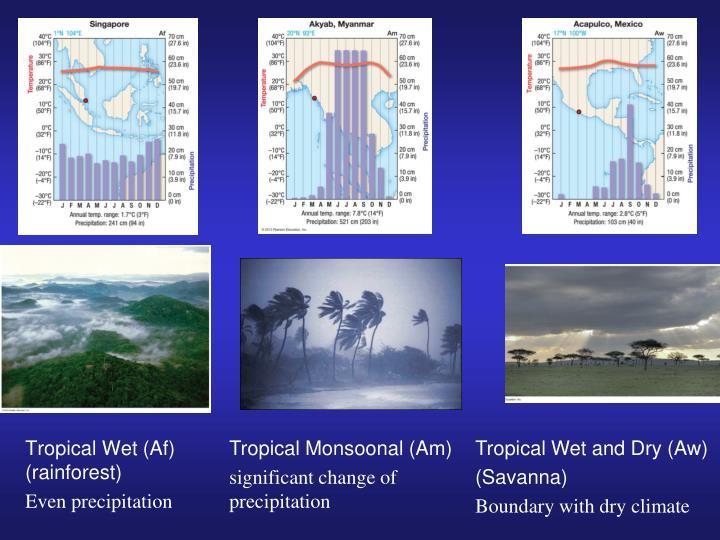 Tropical Wet (Af)  (rainforest)