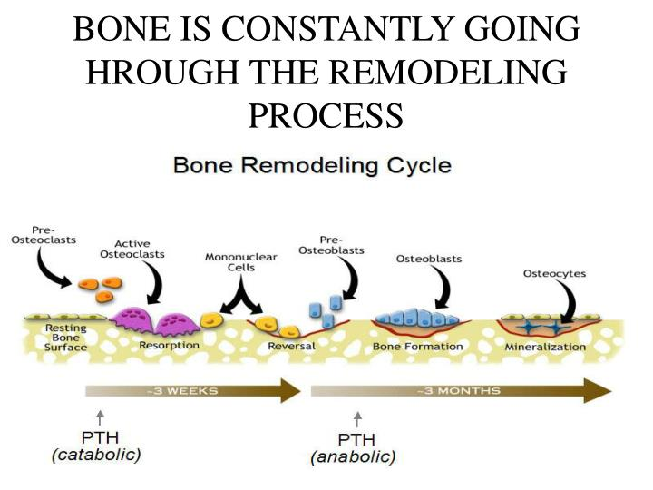 BONE IS CONSTANTLY GOING HROUGH THE REMODELING PROCESS