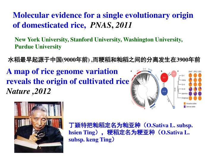 Molecular evidence for a single evolutionary origin of domesticated rice,