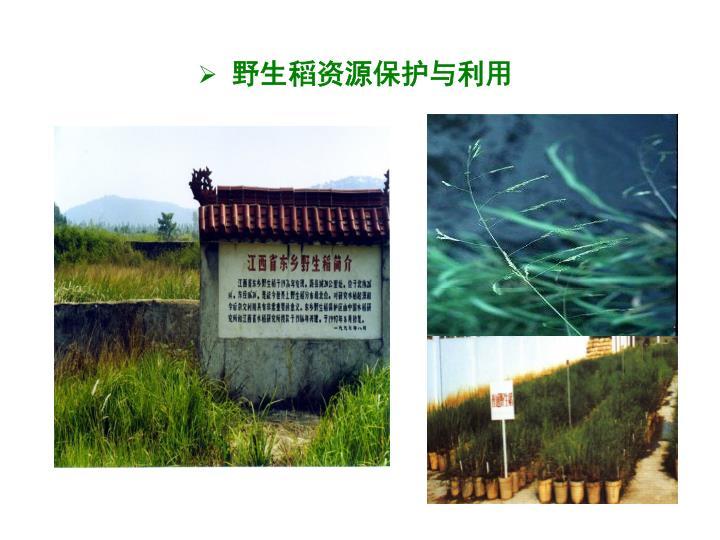 野生稻资源保护与利用