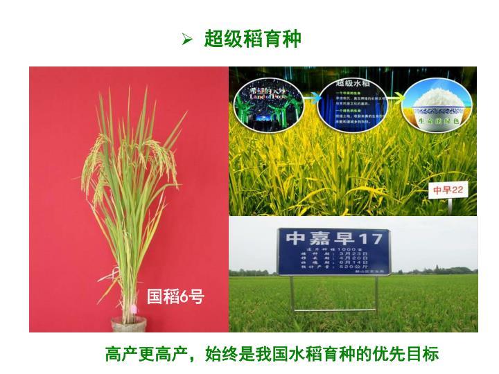 超级稻育种