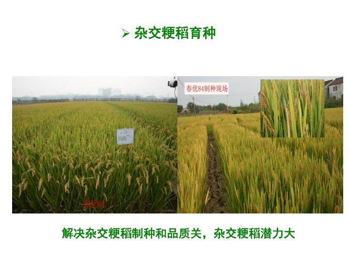 杂交粳稻育种