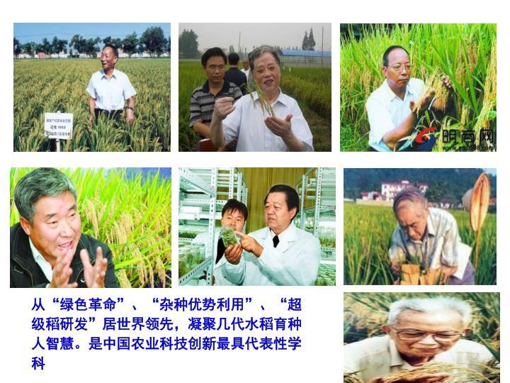 """从""""绿色革命""""、""""杂种优势利用""""、""""超级稻研发""""居世界领先,凝聚几代水稻育种人智慧。是中国农业科技创新最具代表性学科"""