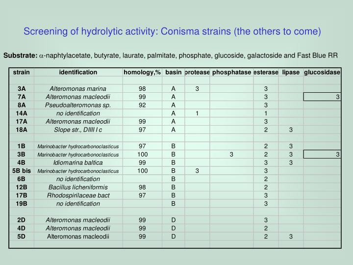 Screening of hydrolytic activity: Conisma strains (the others to come)