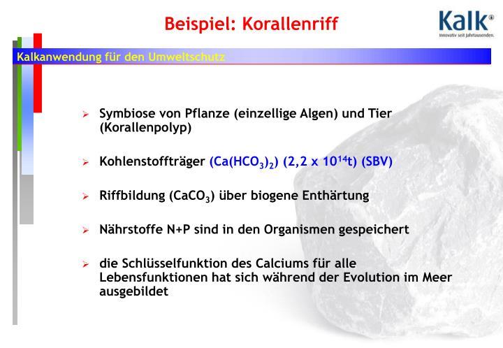 Symbiose von Pflanze (einzellige Algen) und Tier (Korallenpolyp)