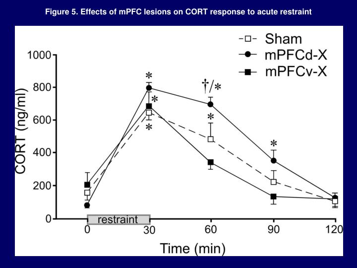 Figure 5. Effects of mPFC lesions on CORT response to acute restraint