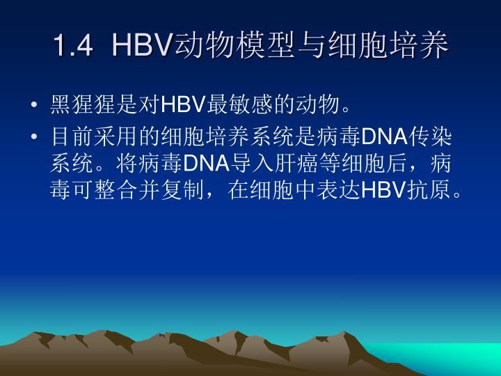 1.4  HBV