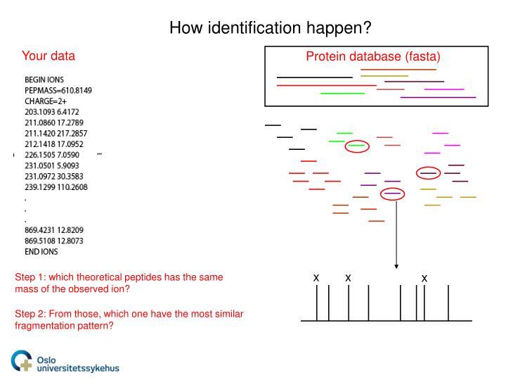 Protein database (fasta)