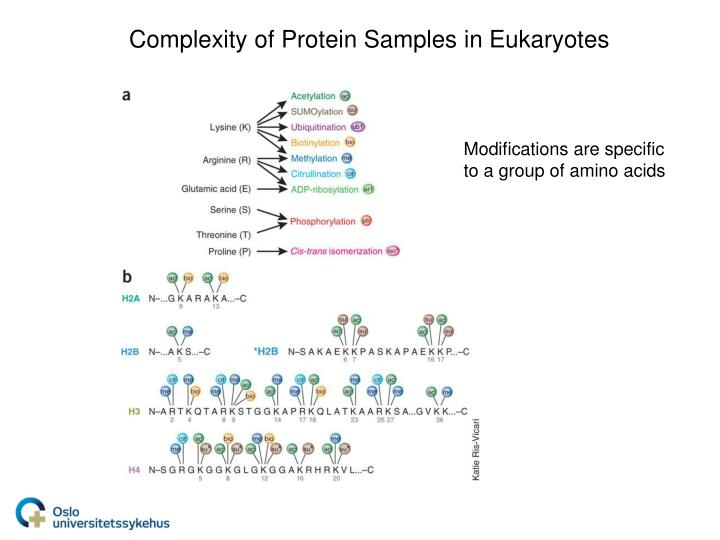 Complexity of Protein Samples in Eukaryotes