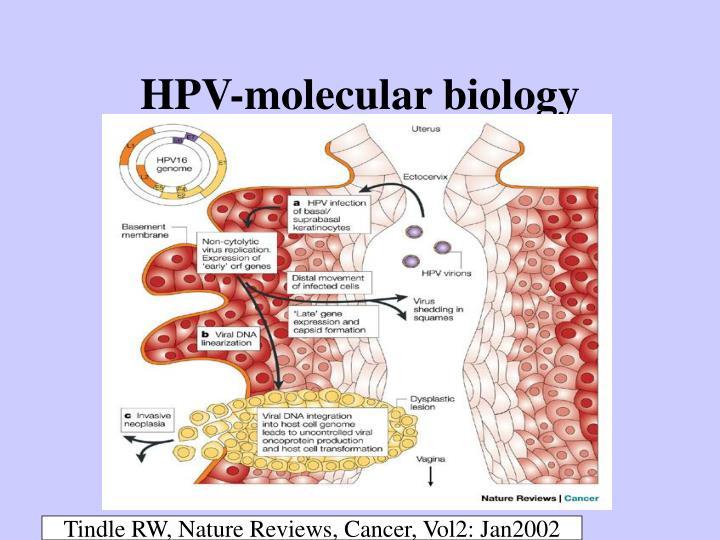 HPV-molecular biology