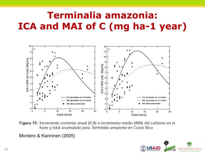 Terminalia amazonia: