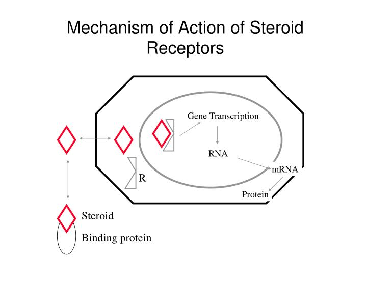 Mechanism of action of steroid receptors