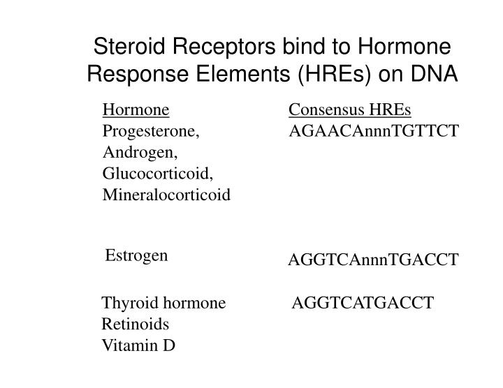 Steroid Receptors bind to Hormone Response Elements (HREs) on DNA