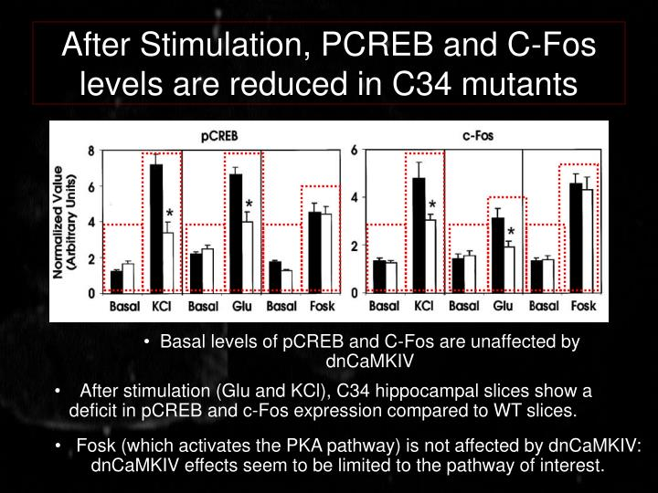 After Stimulation, PCREB and C-Fos levels are reduced in C34 mutants