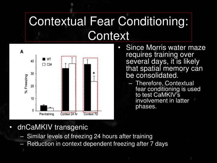 Contextual Fear Conditioning: Context