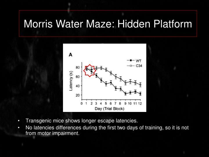 Morris Water Maze: Hidden Platform