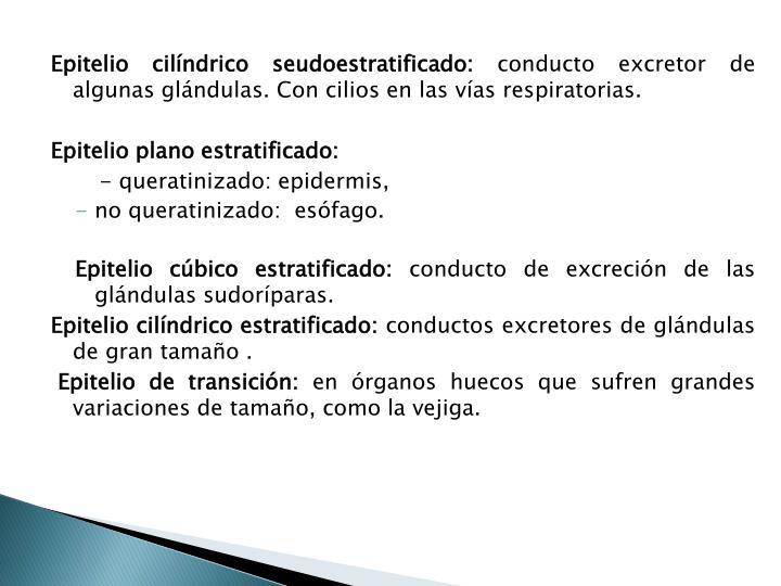 Epitelio cilíndrico seudoestratificado: