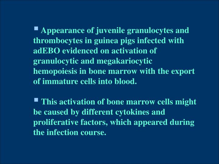 Appearance of juvenile granulocytes and thrombocytes in guinea pigs infected with adEBO evidenced on activation of granulocytic and megakariocytic hemopoiesis in bone marrow with the export of immature cells into blood.