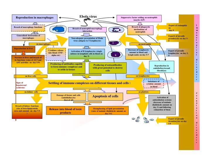 Immunological