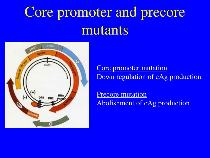 Core promoter and precore mutants