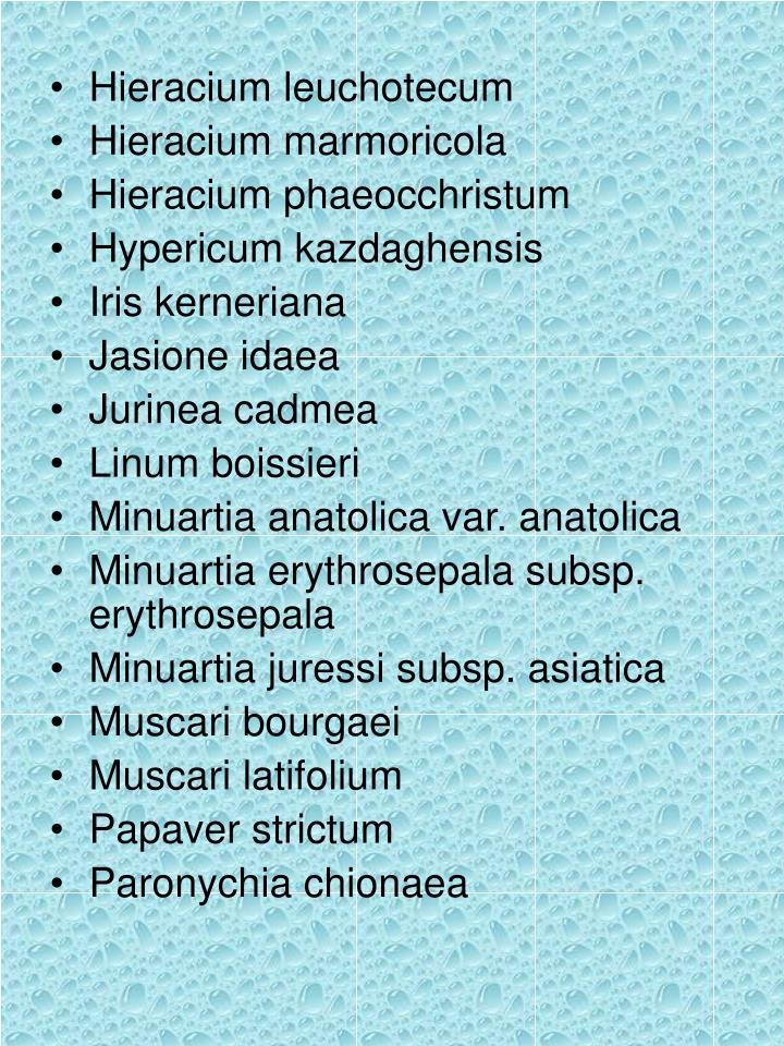 Hieracium leuchotecum