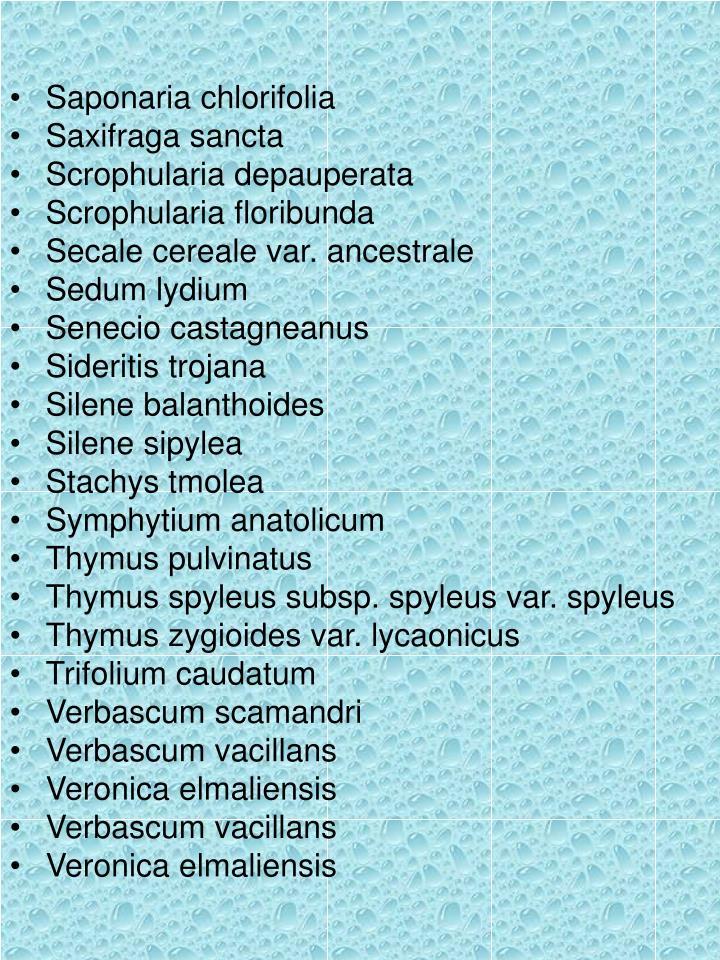 Saponaria chlorifolia