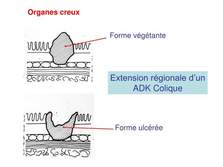 Organes creux