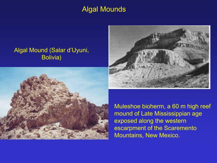 Algal Mounds