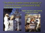 the ahb is a better honey producer in tropical climates compared to ehb