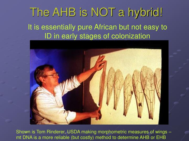 The AHB is NOT a hybrid!
