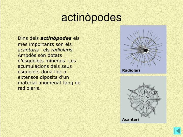 actinòpodes