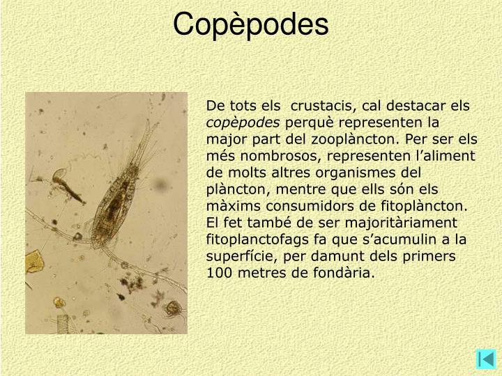 Copèpodes