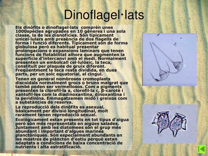 Dinoflagel·lats