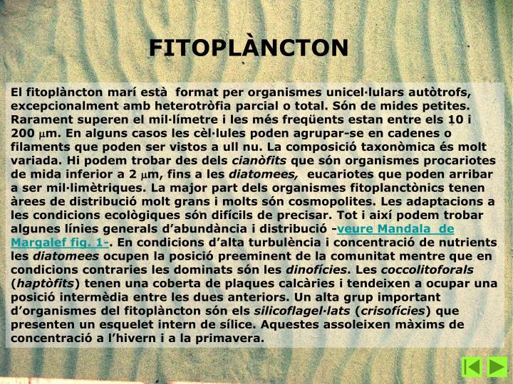 El fitoplàncton marí està  format per organismes unicel·lulars autòtrofs, excepcionalment amb heterotròfia parcial o total. Són de mides petites. Rarament superen el mil·límetre i les més freqüents estan entre els 10 i 200