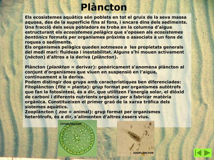 FITOPLÀNCTON