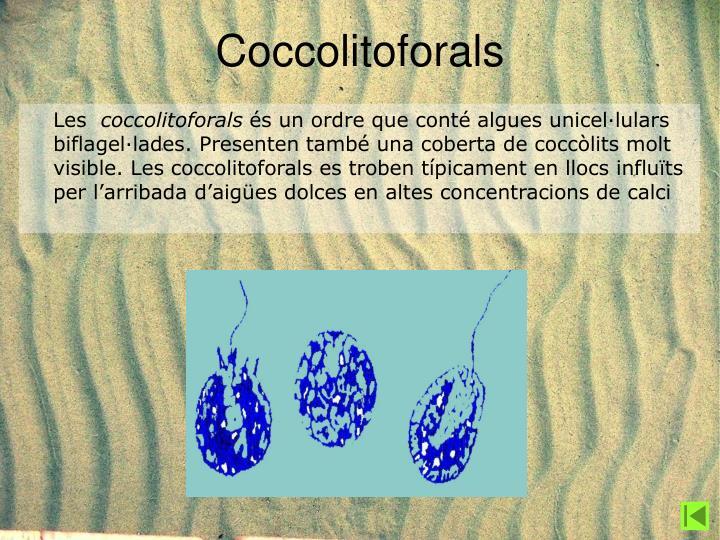 Coccolitoforals