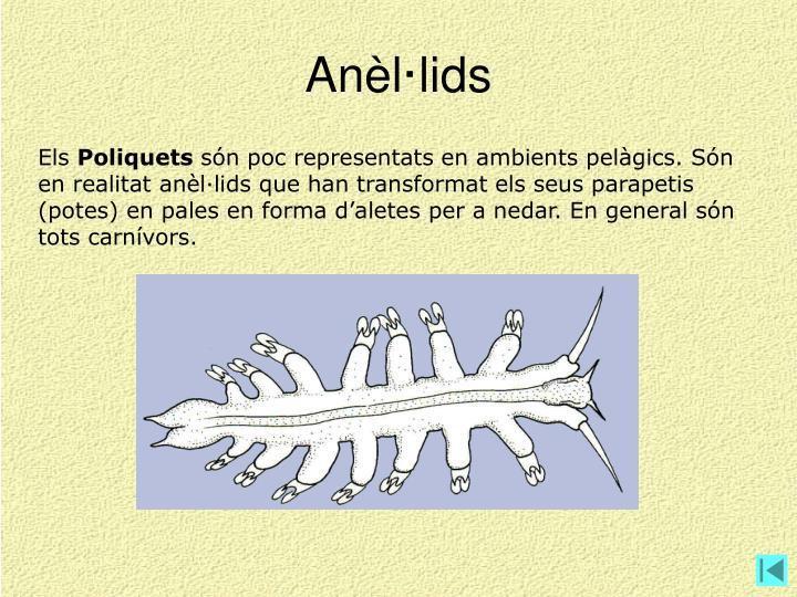 Anèl·lids