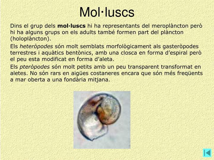 Mol·luscs
