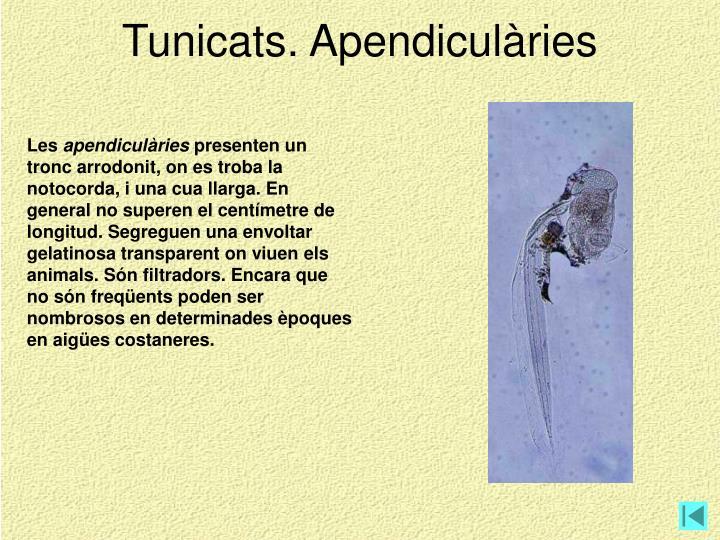 Tunicats. Apendiculàries