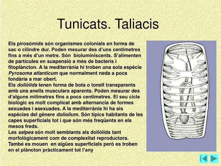 Tunicats. Taliacis