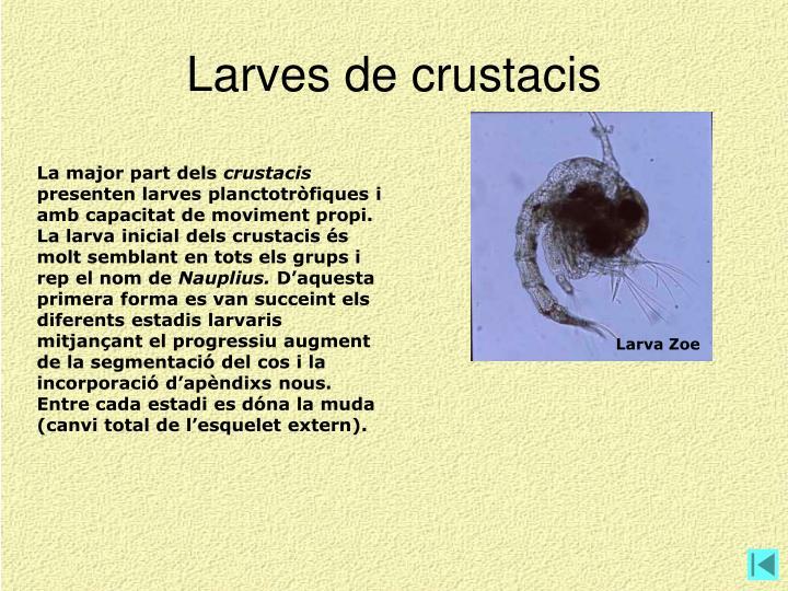 Larves de crustacis