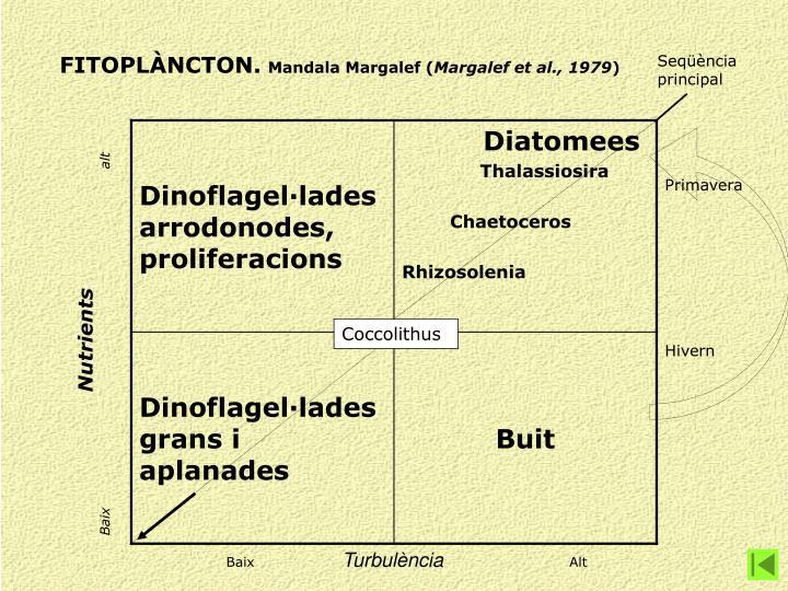 FITOPLÀNCTON.